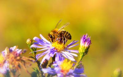 Méhecskék ünnepe