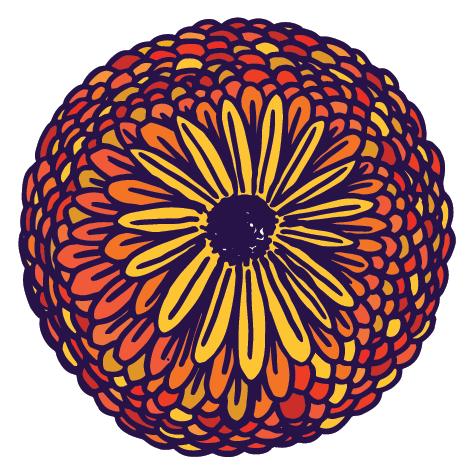Körömvirág illusztráció