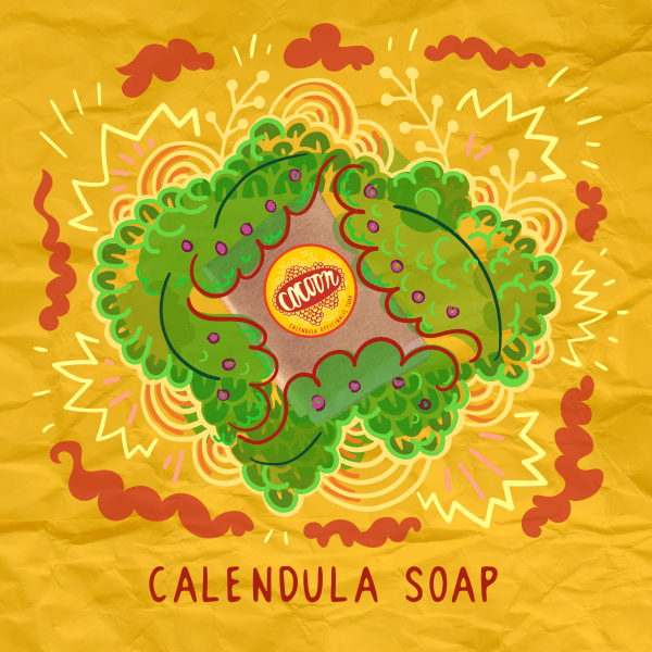 Körömvirág szappan Illusztráció